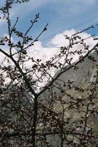rakaposhi_springs.jpg (13586 bytes)